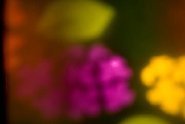 20100630b.jpg